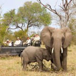 2-family-safari-title-dulini