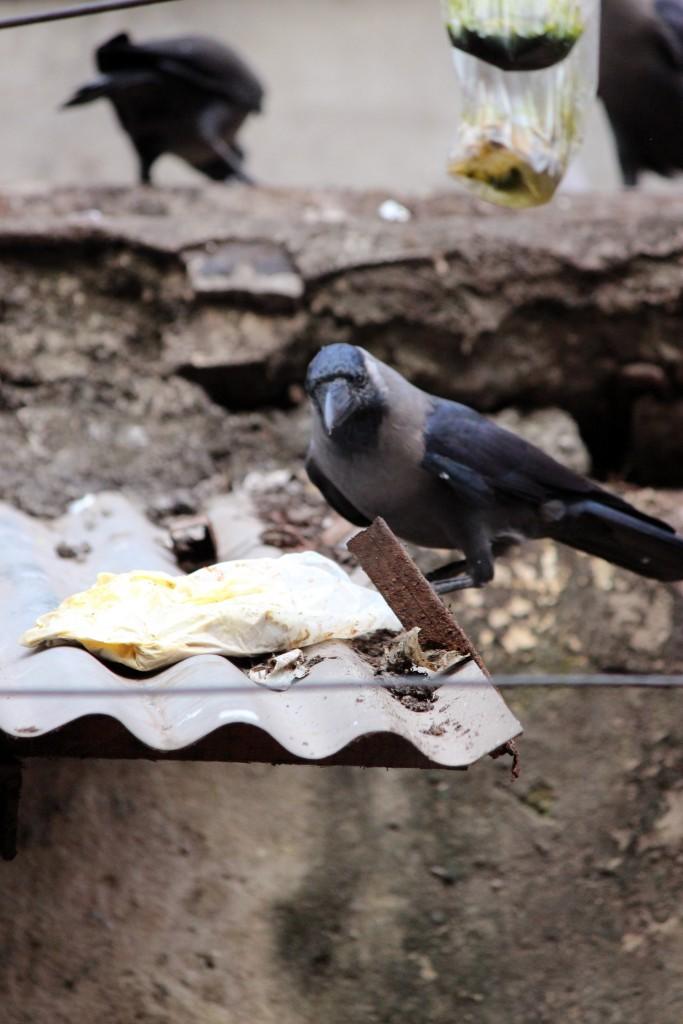 Los cuervos de Calcuta