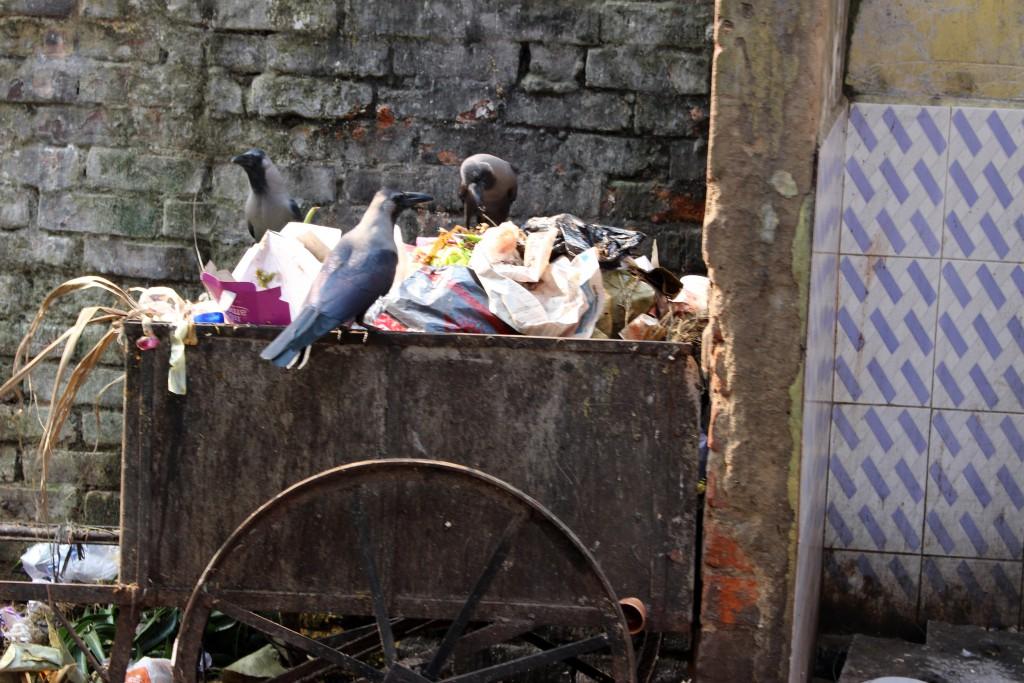 Suciedad y pobreza en Calcuta