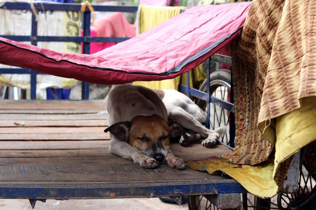 Perro callejero Calcuta - © Luis Martín-Crespo