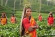 Mujeres en un campo, en La India.