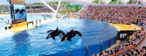 Loro Parque: show de las orcas.