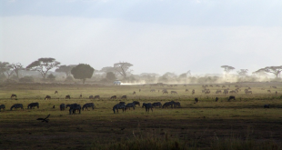 LOs safaris en Kenia ofrecen maravillosas vistas de la fauna en libertad.