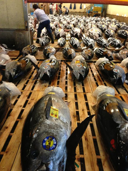 ginza-mercado-tsukiji