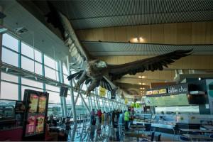 Una de las dos águilas que encontrará sobre su cabeza en el aeropuerto de Wellington.