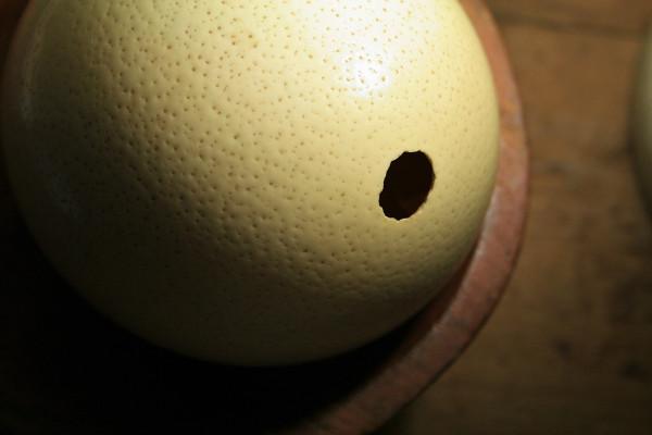 Un enorme huevo de avestruz.