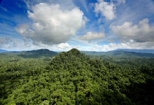 Selva en Sabah. Los bosques de Sabah albergan la mayor biodiversidad de Borneo. Foto: Rhett Butler/Mongabay.com.