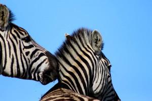 Gondwana Game Reserve nos deja estampas tan bonitas como esta. Foto: Gondwana
