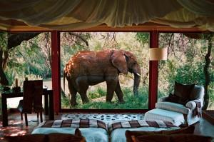 Cosas así suceden en Makanyane Safari Lodge en la reserva Madikwe. Foto: SANParks