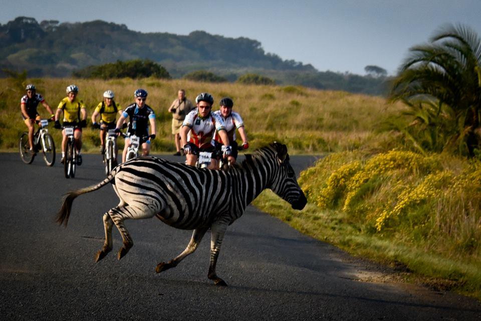 Una sorpresa por el camino en iSimangaliso Wetland Park. Foto: Facebook de iSimangaliso