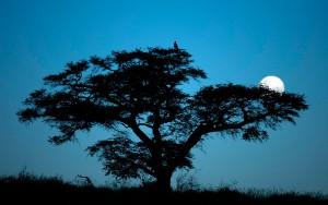 Un entorno duro y árido puede ser tan bello como este en Kgalagadi Transfrontier Park. Foto: página del parque