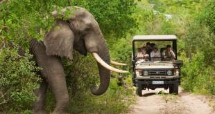 Los safaris son uno de los grandes atractivos turísticos que ofrece Sudáfrica FOTO: TBP