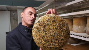 El maestro quesero de Alléosse revisa una pieza envuelta en hierba fresca y heno