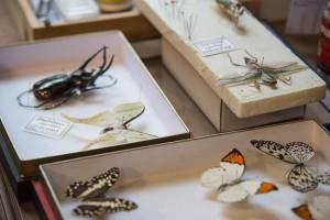 Las cajas para coleccionistas están fabricadas para Deyrolle por los mejores artesanos