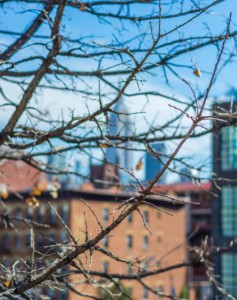 Vistas otoñales de Nueva York desde el High Line