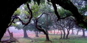 El bosque de laurisilva de Madeira
