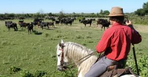 Los gardians son los cuidadores de los caballos de la Camarga, una raza autóctona de esa región