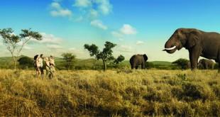 Sudafrica Safari Fitur