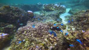Snorkel en Okinawa. Foto: ©JNTO