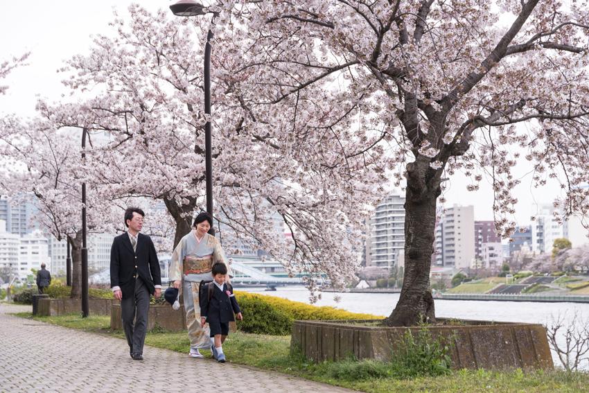 Cerezos en flor a lo largo del río Sumida-gawa