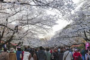 Y el Parque Ueno, el más grande Tokio.