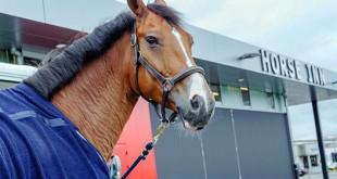 Los caballos de carreras se refugian en el ultramoderno motel de caballos de lujo del aeropuerto de Lieja.