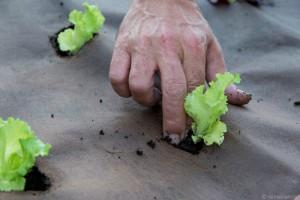 Las verduras llegan a su restaurante directamente de su huerto de Tudela. Foto: © dansanphoto.