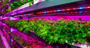 instalación agrícola vertical de Emirates