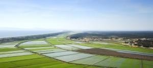 Este gran complejo abarca un territorio que comparten siete aldeas o caseríos: Pego, Carvalhal, Brejos, Torre, Possanco, Carrasqueira y Comporta. En la foto, arrozales junto al mar. Foto: Turismo de Portugal.