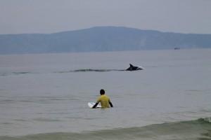 Es un lugar muy apropiado para el surf y el avistamiento de delfines. Foto: Carvalhal Surf School.