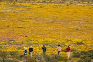 Desierto_Sudáfrica_Flores