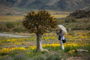 Sudáfrica_Flores desierto 1