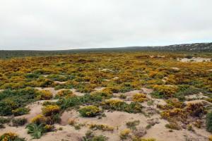 Sudáfrica_Flores desierto 4