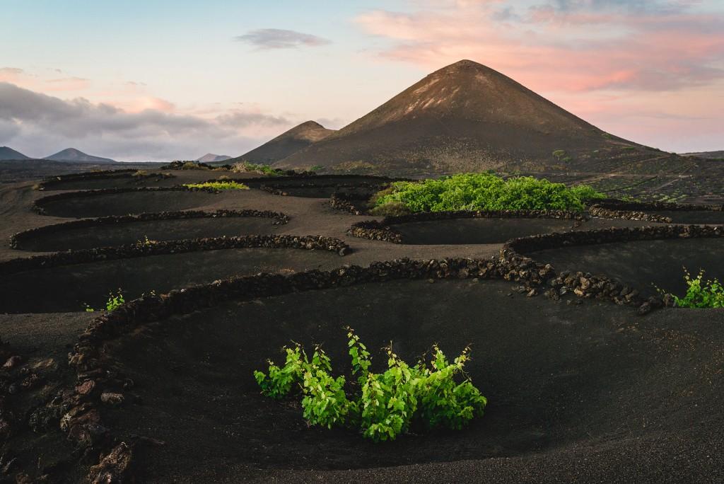 Viñedos de Malvasía volcánica.