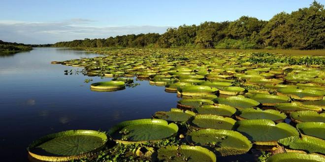 Los esteros del Iberá en la provincia de Corrientes es el segundo mayor humedal de América del Sur.