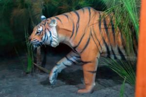 La réplica del centro de interpretación es el único tigre que la mayoría de viajeros avistan en Sundarbans.