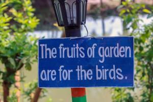 Cartel encontrado entre los árboles frutales de un resort.