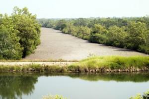 En la Reserva se han construido lagos de agua dulce para los tigres: si se fija bien, podrá observar sus huellas en el cortafuegos.