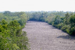 Dos macacos cruzando el bosque de Sundarbans.
