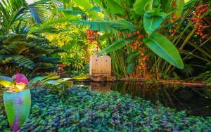 El color verde y la exuberancia vegetal se hacen dueños del paisaje.