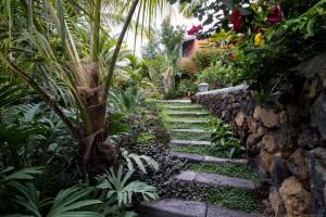 El jardín del hotel, ubicado en la antigua huerta de la hacienda, contiene plantas exóticas y rarezas botánicas.