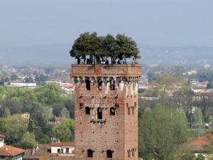 La torre de la familia Guinigi, dueños de buena parte de la ciudad en el siglo XIV, llama la atención por el arbolado que en su día plantaron sus propietarios.