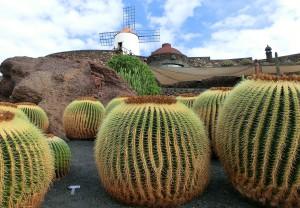 Lanzarote, de su campo volcánico brotan verdaderas joyas gastronómicas, como son sus papas o batatas de jable.
