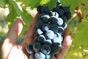 Con 50 regiones vinícolas por todo el país, España es el tercer productor mundial de vino.