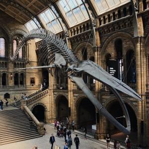 El Museo de Historia Natural de Londres guarda más de 80 millones de especímenes.