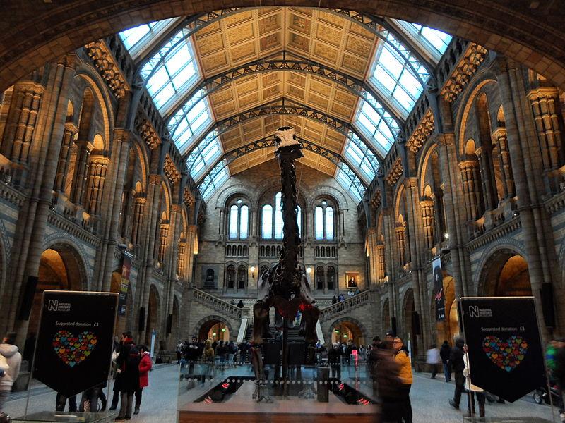 Junto con sus famosos esqueletos de dinosaurios, alberga ejemplares únicos de flora, fauna, rocas y fósiles.