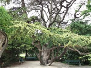 Sobre los cimientos de Aviñón hoy crecen grandes árboles, plantas y flores entre estanques y caminos agradables por los que pasear.