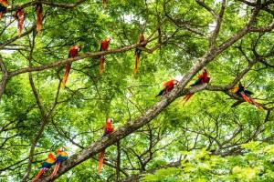Costa Rica es hogar de más de 500.000 especies. Es uno de los 20 países con la más alta biodiversidad en el mundo.