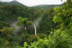 Bosques del país.