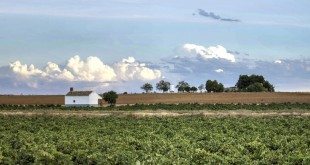 """Sus 27.000 hectáreas de viñedos y 13 bodegas locales hacen a Socuéllamos poseedor del título de """"patria del vino""""."""